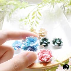 フリル/あぼかぼつまみ細工 縁取りフリルのお花が咲きました💕 耳飾り…