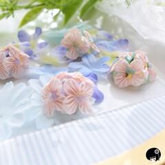 あぼかぼつまみ細工 ピンクの紫陽花✖️シェル💖 青系の紫陽花…