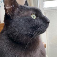 黒猫/暮らし 雨の空を見つめるキリッとイケニャンな今日…
