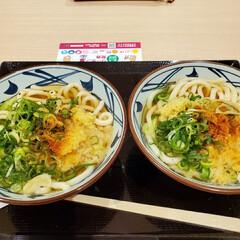 食事情/今日(1月24日)までやってる丸亀... 今、キャンペーンをやってる丸亀製麺です。…