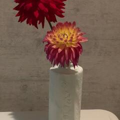 花瓶/マルチプライマー/アイアンペイント/プラスターメディウム/空きボトル/ターナー シャンプーの空きボトルを 漆喰風ペイント…