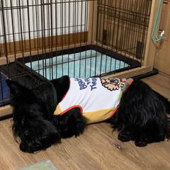 犬のいる暮らし/犬派/いぬ/犬好き/ペットのいる暮らし 今日の寝姿…zzZ 黒ワンは暑くてフロー…(1枚目)
