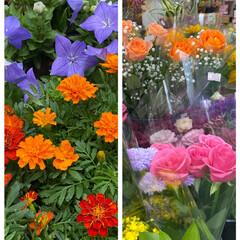 「南部市場の中のお花屋さんで…」(1枚目)