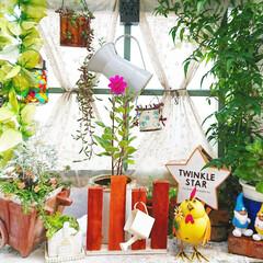 DIY/diyウッドデッキ/ウッドデッキ/庭/花のある生活/花のある暮らし/... 今日のマイガーデン🌼✨  昨日咲いたピン…
