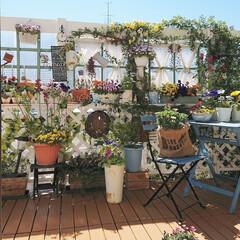 花のある生活/花のある暮らし/花/春のフォト投稿キャンペーン/DIY/建売住宅/... 先週の晴れた日に撮ったDIYウッドデッキ…