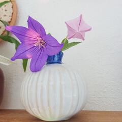 暮らし/花のあるインテリア/蕾/花のある生活/花のある暮らし/花/... 庭で育ててるキキョウをリビングに飾りまし…