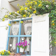 花のある生活/花のある暮らし/花/DIYガーデン/ナチュラルガーデンを目指して/ガーデニング/... おうち時間を使って 玄関前のパーテーショ…