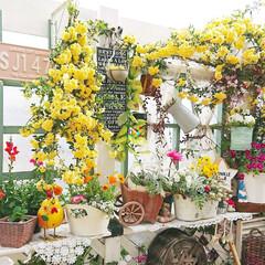 ガーデニング初心者/DIYガーデン/庭/diyウッドデッキ/ウッドデッキ/花のある生活/... 少し前のpicです✨  たくさん咲いてく…