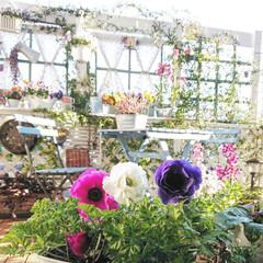 DIY/アネモネポルト/お花/花/花のある暮らし/マイガーデン/... 昨年お迎えしたアネモネポルトが気に入った…