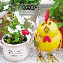 ガーデニング雑貨/ガーデニング初心者/切り戻したお花/切り戻したビオラ/ガーデニング/庭/... 切り戻したビオラ🌼✨ 可愛いく咲いてくれ…