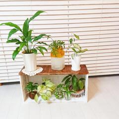 グリーンのある生活/グリーンのある暮らし/母の日/端材DIY/端材/棚DIY/... 先日の母の日に作った棚です😌💓  今年は…
