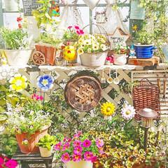 diyウッドデッキ/ウッドデッキ/花のある生活/花のある暮らし/花/ガーデニング/... 昨日のマイガーデンです😌💓  冬~春のお…