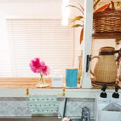 キッチンカウンター/ラナンキュラス/花のある暮らし/花のある生活/お花/キッチン/... 今日はキッチンカウンターにお庭から取って…