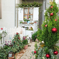 マイガーデン/お花のある暮らし/お花/グリーンのある生活/グリーンのある暮らし/玄関アプローチ/... 玄関前のアプローチです🎄✨  グリーンに…