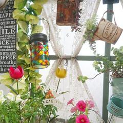 お気に入り/チューリップピック/暮らし/花のある生活/花のある暮らし/花/... お気に入りのダイソーのチューリップピック…