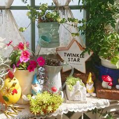 花のある暮らし/花のある生活/ウッドデッキガーデン/ウッドデッキ/庭/DIYガーデン/... 毎日すごく暑いですね~💦 お花の花柄摘み…