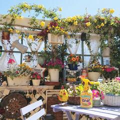 おすすめ商品/植物/植物のある生活/植物のある暮らし/ロハピ/花のある生活/... 少し前に撮ったpicです✨  ガーデニン…