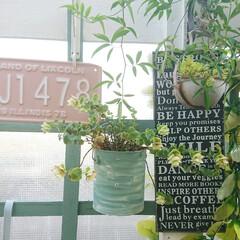 ガーデニング初心者/ガーデニング/グリーンのある生活/グリーンのある暮らし/庭/空き缶アレンジ/... 今日のマイガーデン🌼✨  長かった梅雨の…