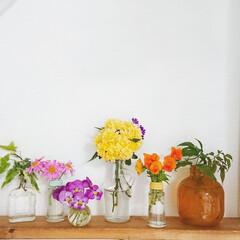 空き瓶/ハゴロモジャスミン/マーガレット/アイビー/ビオラ/モッコウバラ/... 今日は色んなお花を少しづつ庭から取ってき…