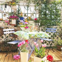 花のある生活/花のある暮らし/お庭でおうちカフェ/お庭/diyウッドデッキ/ナチュラルガーデン/... 今日は暖かかったので ウッドデッキに出て…