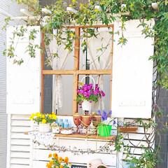 ガーデニング初心者/DIYガーデン/ナチュラルガーデン/diyパーテーション/DIY/花のある生活/... 玄関前に作ったパーテーション🌿✨  ここ…