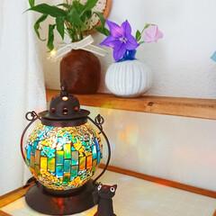 イシグロ 照明器具 21207 モザイクランプ クリムト ランタン型 グリーン(デスクライト)を使ったクチコミ「リビングに作った棚にキキョウを飾りました…」