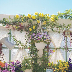 diyウッドデッキ/DIY/建売住宅/ウッドデッキガーデン/ウッドデッキ/モッコウバラ/... まだ少しだけですが モッコウバラが咲き始…