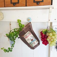 プミラ/アレンジ/グリーンのある生活/グリーンのある暮らし/インテリア/コーヒー/... お気に入りのコーヒーのパッケージが可愛い…