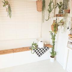 ベンチ収納/ベンチ/DIY/インテリア/家具/収納 以前アイデアでも投稿した収納ベンチです~…