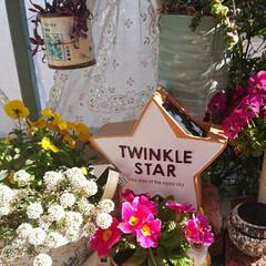 DIYガーデン/ナチュラルガーデン/花のある生活/花のある暮らし/ナチュラルガーデンを目指して/スリーピー/... ダイソー姉妹店で見つけた星形のソーラーラ…