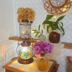 イシグロ 照明器具 21207 モザイクランプ クリムト ランタン型 グリーン(デスクライト)を使ったクチコミ「庭で育ててるペチュニアがすごく伸びてきた…」(1枚目)