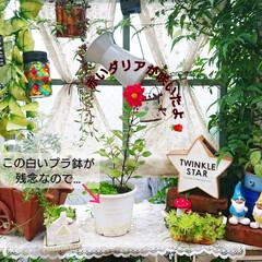 diyウッドデッキ/ウッドデッキ/花のあるインテリア/花のある生活/花のある暮らし/花/... 先日咲いた赤いダリア🌼  ダリアを入れて…