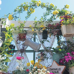 diyウッドデッキ/DIYガーデン/ナチュラルガーデン/青空/モッコウバラ/ガーデニング初心者/... 毎日少しずつ咲きはじめているモッコウバラ…