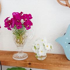 ビオラ/インテリア/インテリア雑貨/花のある生活/花のある暮らし/花/... 昨日庭から摘んできたビオラ🌷✨  今日も…