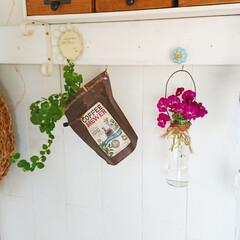 リメイク/リビングダイニング/ビオラ/花のある生活/花のある暮らし/花/... 庭の伸びきったビオラをカットして飾ってみ…