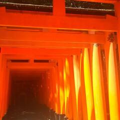 鳥居/伏見稲荷大社/京都/おでかけ 京都の伏見稲荷大社です。 有名な鳥居を …