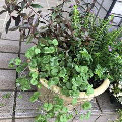 秋のガーデニング/寄せ植え 昨日はちょっと庭いじり🌿 秋色の寄せ植え…
