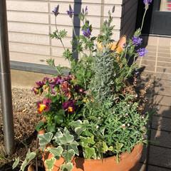 ガーデニング/寄せ植え いい天気です☀️ この週末は、まったり家…
