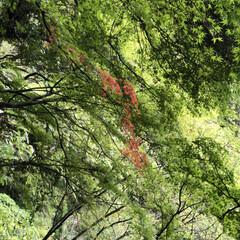 紅葉/トレッキング 先日のトレッキングで見つけた小さい秋🍁🍂…