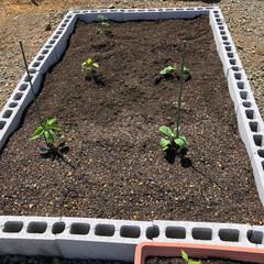 家庭菜園/野菜作り/ミニミニ菜園 なーんにもないガランとした庭に、ブロック…