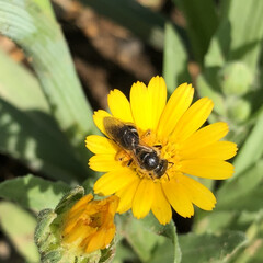 蜂/花/いい天気 おはようございます😊 いい天気で気持ちい…(2枚目)
