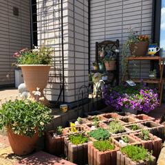 休みの日/ガーデニング/庭づくり 雨が上がって、☀️出てきてムシムシ暑かっ…