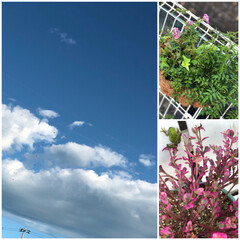 ハンギング/カエル/熱中症には気をつけて/いい天気/青空 おはようございます☀ 早朝から青空が広が…