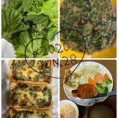 家庭菜園/野菜/夜ご飯/おうちごはん/暮らし 昨日の夜ご飯♡ 家で採れた大葉を大葉味噌…(1枚目)