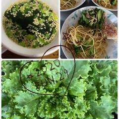 家庭菜園/野菜/夜ご飯/おうちごはん/暮らし 昨日の夜ご飯♡ 家で採れた大葉を大葉味噌…(2枚目)