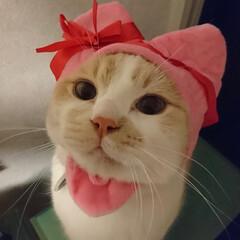 ちゅーる食べたい/キューピッド/バレンタイン2020 にゃっぴーバレンタイン(`・ω・´)❤️