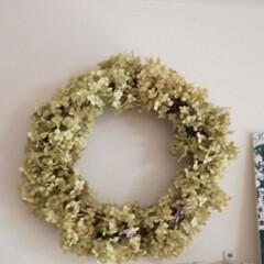 アナベル/ドライフラワー/リース 毎年玄関脇の花壇で咲くアナベル(西洋アジ…