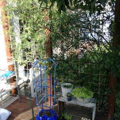 ウッドデッキ/庭/目隠しフェンス/モッコウバラ 以前記事で紹介したモッコウバラを誘引させ…