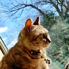 冬/窓/ねこ/まーちゃん ⛅️冬の窓辺のまーちゃん。🍂🌀 外は寒い…