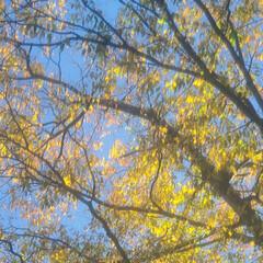 紅葉/光/朝/風/秋 🔸🍂秋風にきらめく木の葉🍃🔸(1枚目)